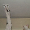 Cat changing lightbulb