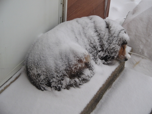 Dog sleeping in snowstorm