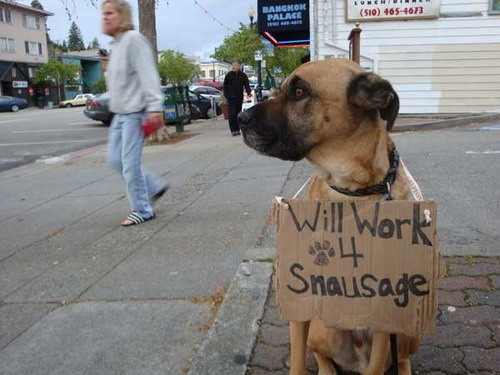 Dog will work for sausage