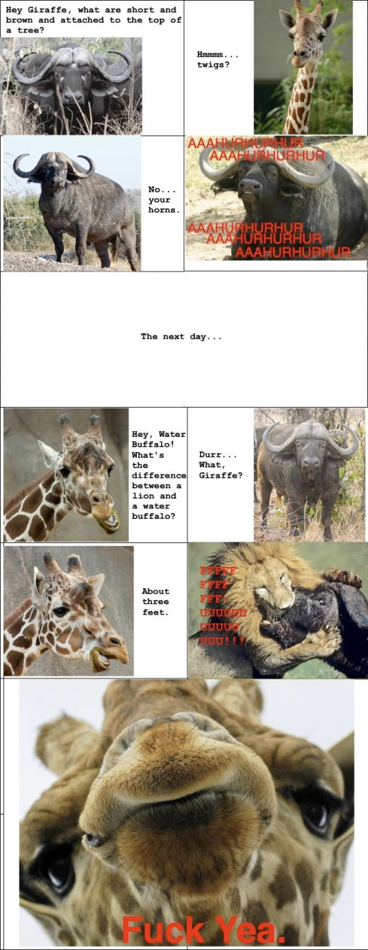 Giraffe vs. water buffalo
