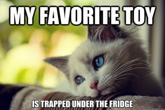 Cat first world problems