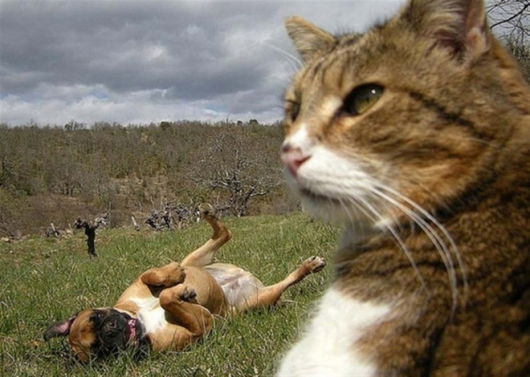 Cats taking selfies - Picture 10