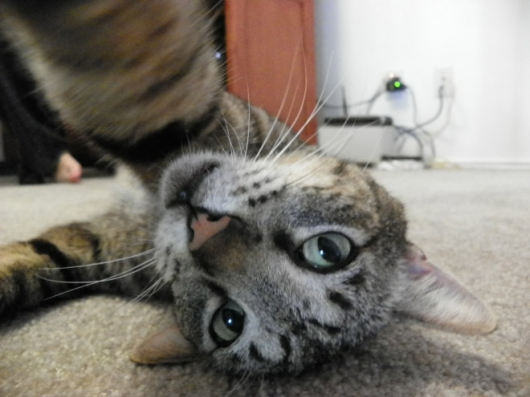Cats taking selfies - Picture 11
