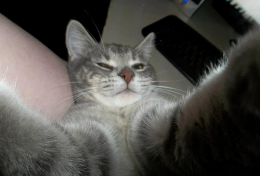 Cats taking selfies - Picture 12