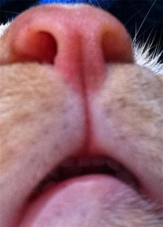 Cats taking selfies - Picture 13