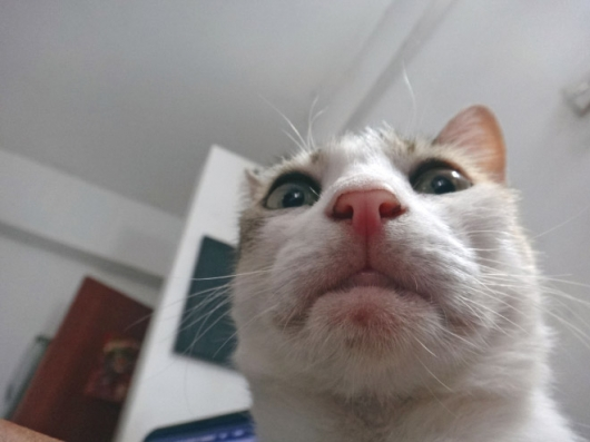 Cats taking selfies - Picture 17