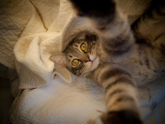 Cats taking selfies - Picture 2
