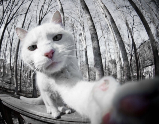 Cats taking selfies - Picture 22