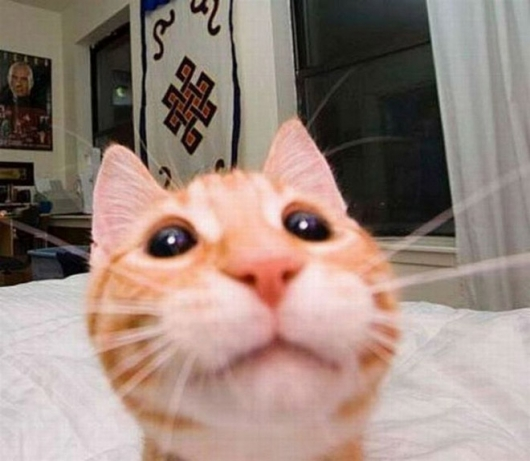 Cats taking selfies - Picture 24