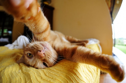 Cats taking selfies - Picture 3