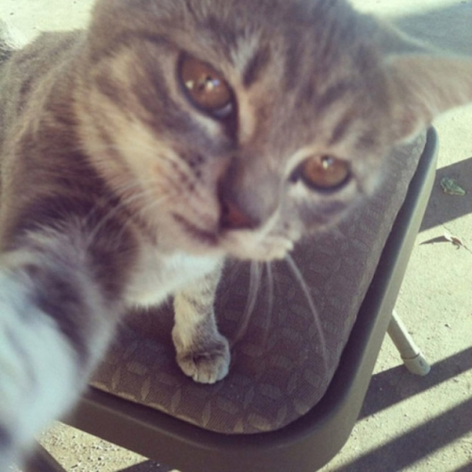 Cats taking selfies - Picture 9
