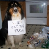 Dog punishment