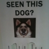 Have you seen this dog