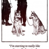 Police dog problems