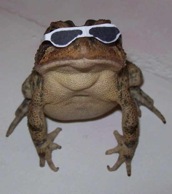 Cool frog is cool - Really funny pictures collection on ...
