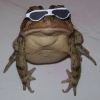 Cool frog is cool