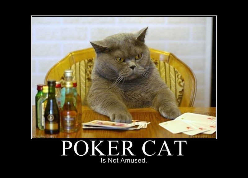 Poker cat is not amused - Really funny pictures collection ...