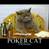 Poker cat is not amused