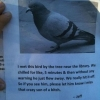 Have you seen this bird