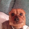 Half dog, half bread