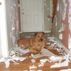 Dog vs. wallpaper
