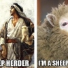 Sheep Hurr Durr