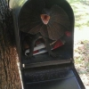 Lizard in the mailbox