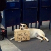 Straight forward beggar dog