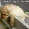 I was jumping but I fell'd asleep