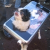 iPhone dog costume