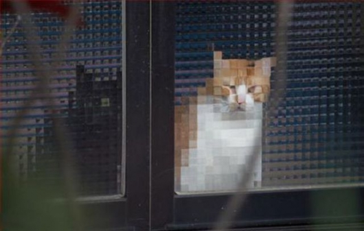 Pixelated cats