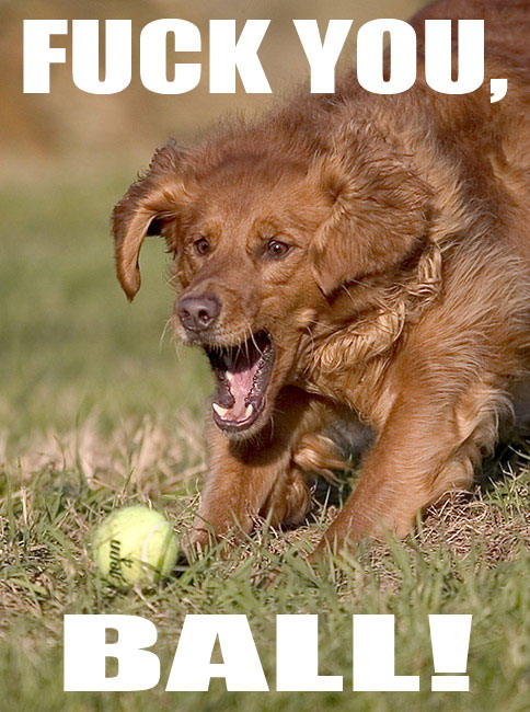 angry dog   really funny pictures collection on picshag