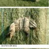Badger had a bad day...
