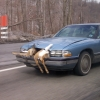Car-deer accident