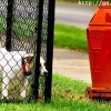 Dog fire hydrant fail