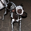 Dog skeleton costume