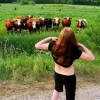 Flashing the cows