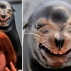 Freaky sea lion