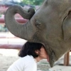 Girl giving head to an elephant