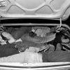 How many illegal immigrants can you fit into the trunk of a car?