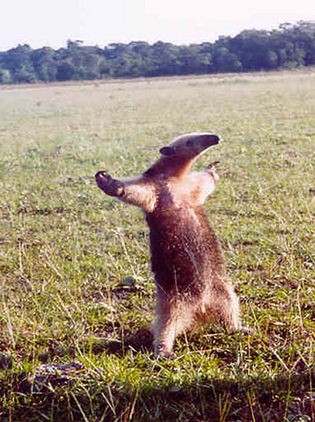 I'm an anteater! - Rea...