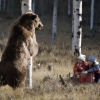 Kids tricking a bear with an apple