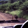 Real life Timon and Pumba