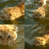 Scared swimming cat