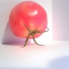 Tomato carrying itself