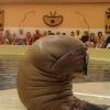 Walrus is embarrassed