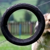 Dog-through-tire jump fail