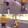 Bicyclists vs. Koala bear