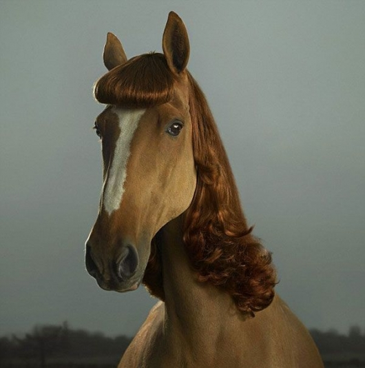 Beautiful lady horse