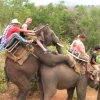 Elephant ride fail